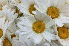VahldiekAG_Webshop_Blumengroßhandel090720-2