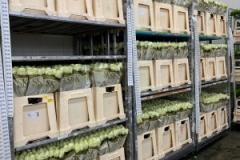 blumengrosshandel-schnittblumen-vahldiek-muttertag-1