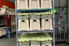 blumengrosshandel-schnittblumen-vahldiek-muttertag-12