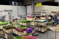 blumengrosshandel-schnittblumen-vahldiek-muttertag-17