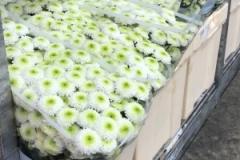 blumengrosshandel-schnittblumen-vahldiek-muttertag-5